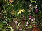 Galerie Aachen_Soers_orchideenausstellung_31012009_2.jpg anzeigen.